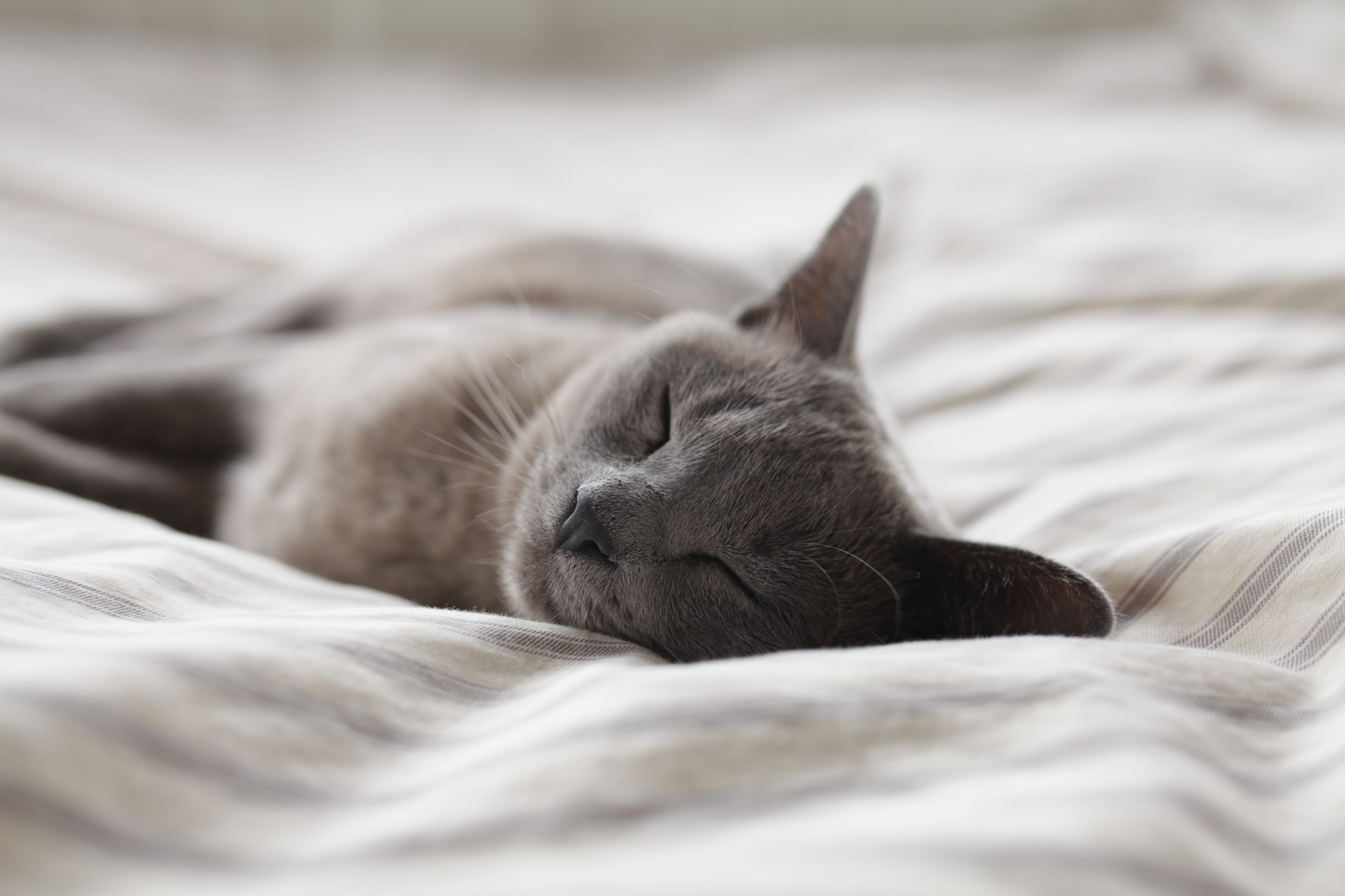 How To Get A Better Sleep Naturally - Improve Your Sleep Quality