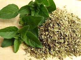 Picture of medicinal herbs